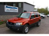 2006 Blazing Copper Metallic Ford Escape XLT V6 4WD #13012062