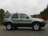2006 Titanium Green Metallic Ford Escape XLT V6 #21619868