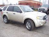 2011 Ford Escape Gold Leaf Metallic
