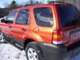 2006 Blazing Copper Metallic Ford Escape XLT V6 4WD #4557551