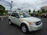 2009 Light Sage Metallic Ford Escape XLT 4WD #50965344