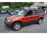 2006 Blazing Copper Metallic Ford Escape XLT V6 4WD #51189067