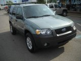 2006 Titanium Green Metallic Ford Escape XLT V6 #51425241