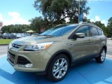 2014 Ford Escape Ginger Ale