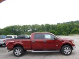 2014 Sunset Ford F150 XLT SuperCrew 4x4 #95510502