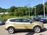 2014 Karat Gold Ford Escape SE 1.6L EcoBoost 4WD #96805093