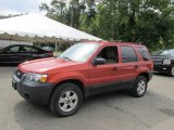 2006 Blazing Copper Metallic Ford Escape XLT V6 4WD #96879806