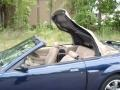 2003 True Blue Metallic Ford Mustang GT Convertible  photo #18